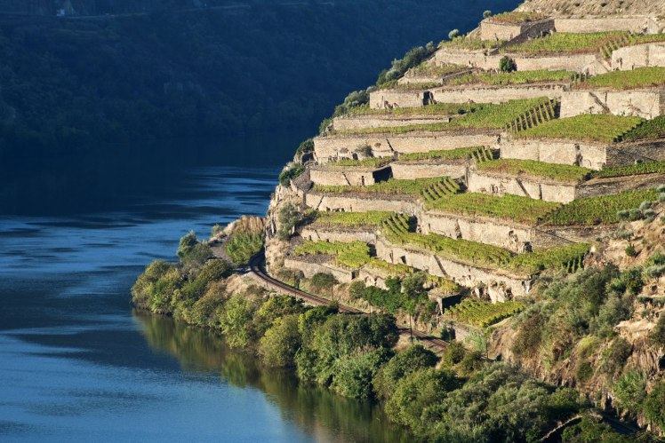 douro valley the wine junkies