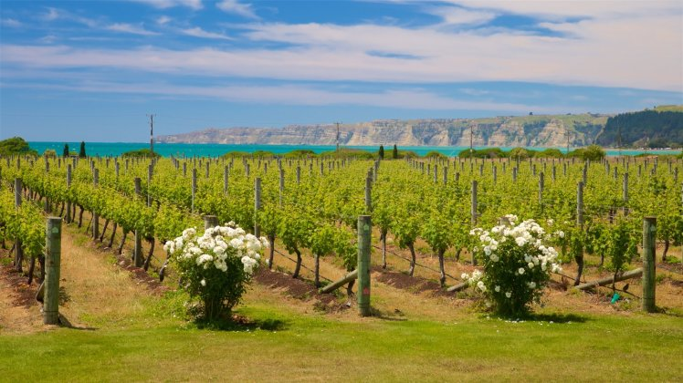 hawkes bay the wine junkies