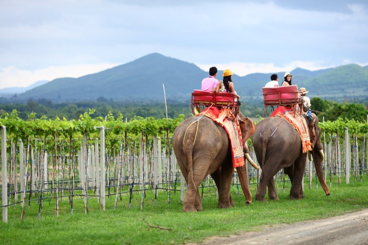hua hin monsoon valley the wine junkies