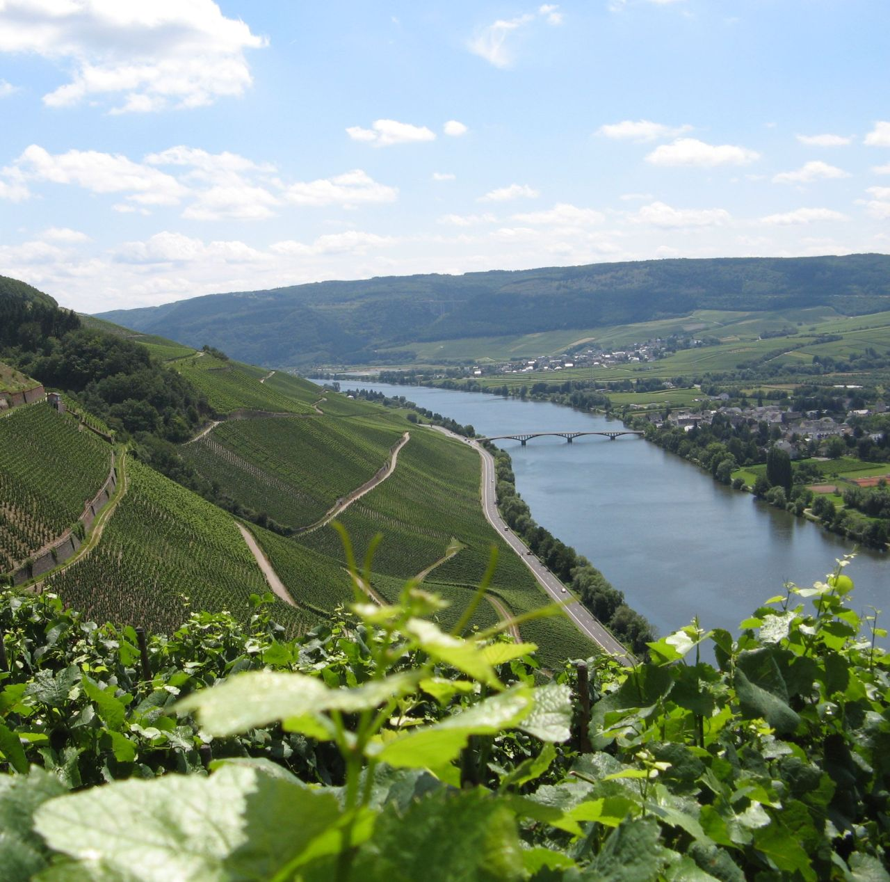 mosel valley the wine junkies