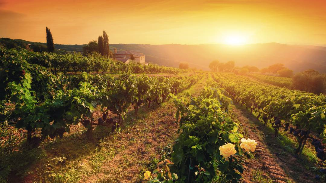 Top 10 Most Beautiful Wine Regions in the World