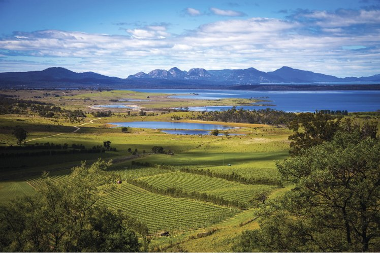 tasmania the wine junkies
