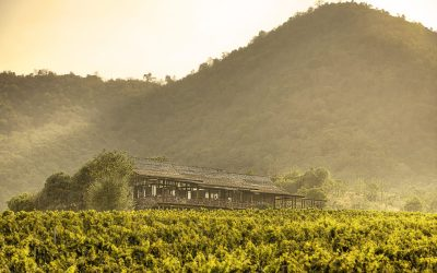 the_wine_junkies_monsoon_valley_4