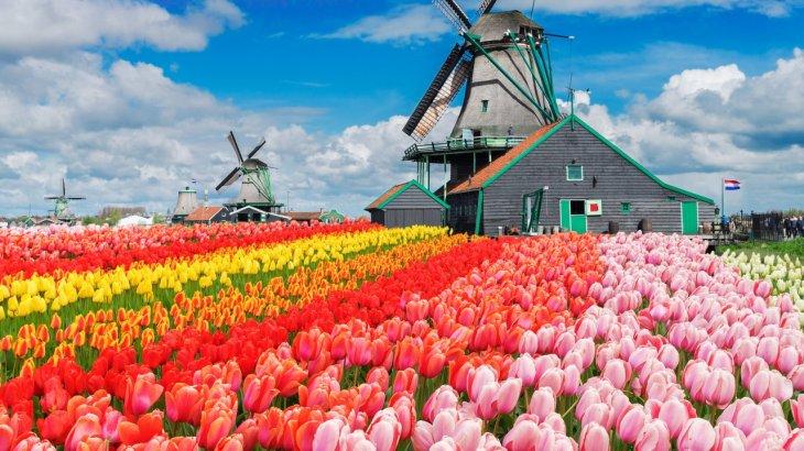 the_wine_junkies_tulips